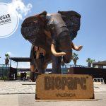 Un día en Bioparc, un espacio que protege a la fauna de nuestro planeta en el corazón de Valencia